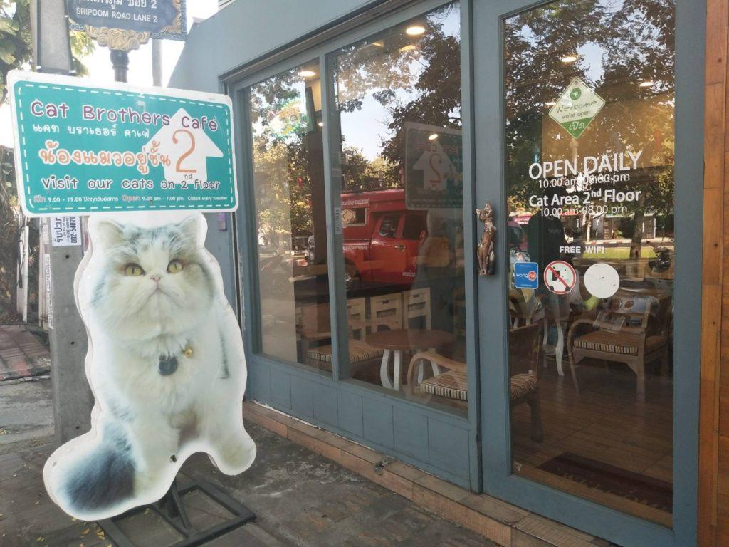 คาเฟ่แมว Cat Brothers Café