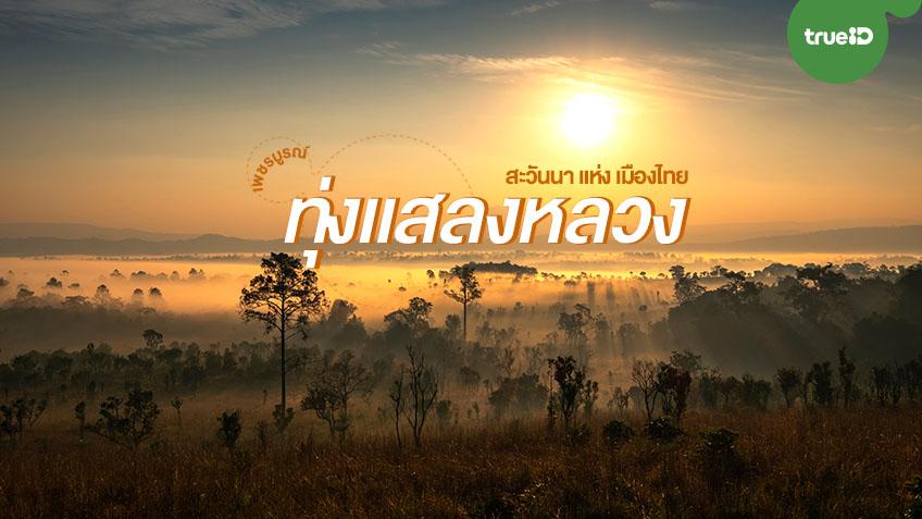 ทุ่งแสลงหลวง เที่ยวชมผืนป่าสะวันนา ต้นไม้หลากหลายสายพันธ์  จังหวัดเพชรบูรณ์