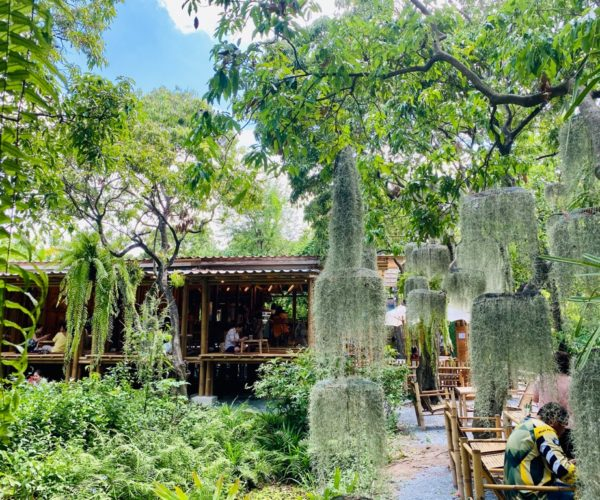Natura Garden Cafe หลงไปคาเฟ่ในสวนลิ้นจี่อายุร้อยปี แห่งเมืองกรุง ย่านพระราม 2