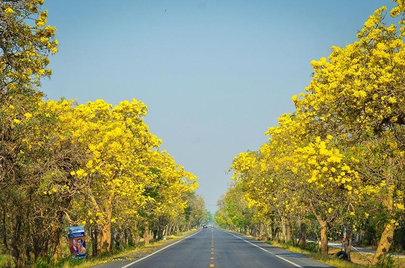 สถานที่น่าเที่ยว-ถนนดอกไม้ตาเบบูญ่า