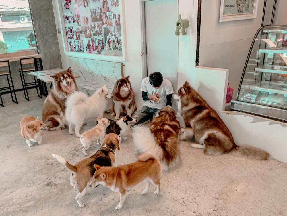 Box box dog cafe