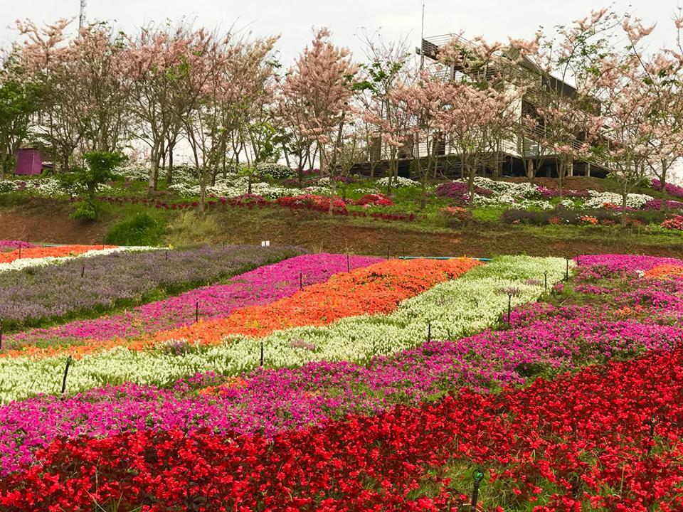 เที่ยวฟลอร่า พาร์ค-สวนดอกไม้ที่อยู่ภายในหุบเขาของวังน้ำเขียว
