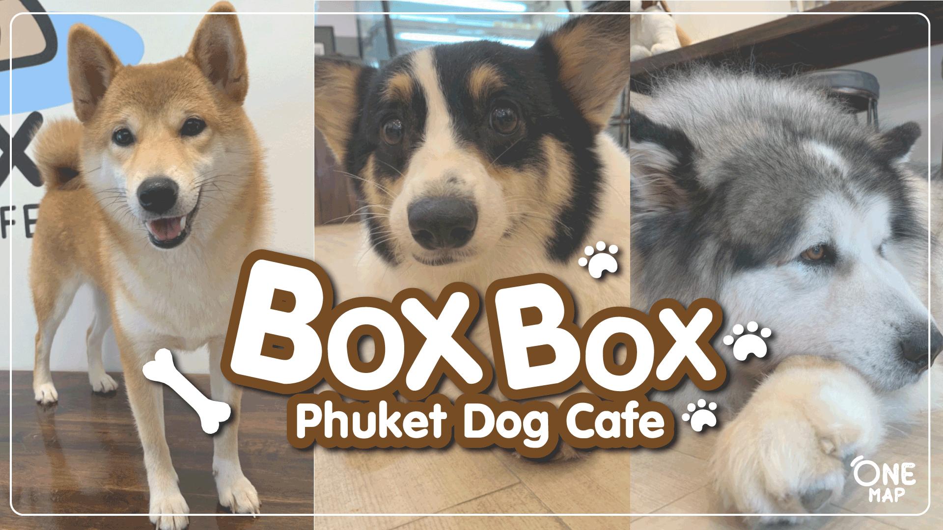คาเฟ่น้องหมา ใจกลางเมืองภูเก็ต Box box dog cafe ที่มาเอาใจคนรักสัตว์เลี้ยง