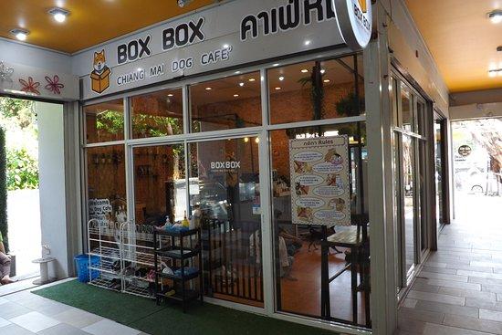 Box box dog cafe-คาเฟ่น้องหมา