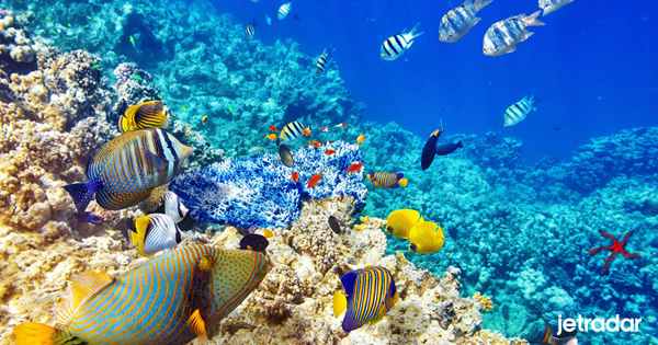เที่ยวประเทศฟิลิปปินส์-ปะการังตุบบาตาฮา