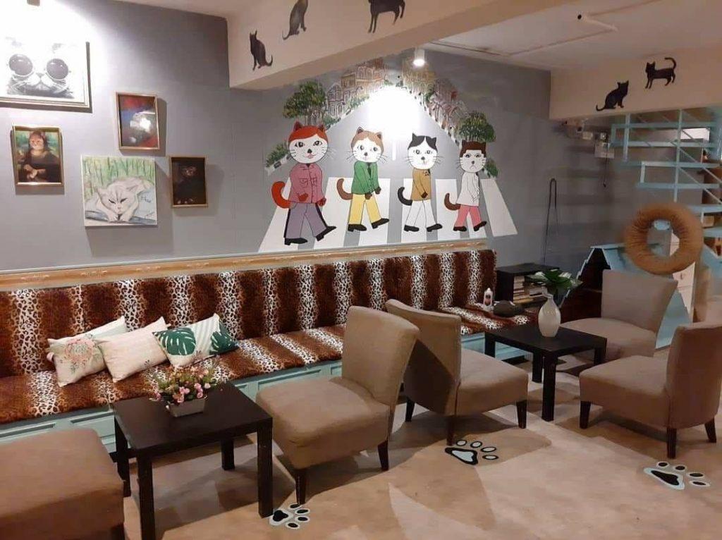 B Cat Cafe คาเฟ่แมว สถานที่ท่องเที่ยวย่านเมืองเก่า