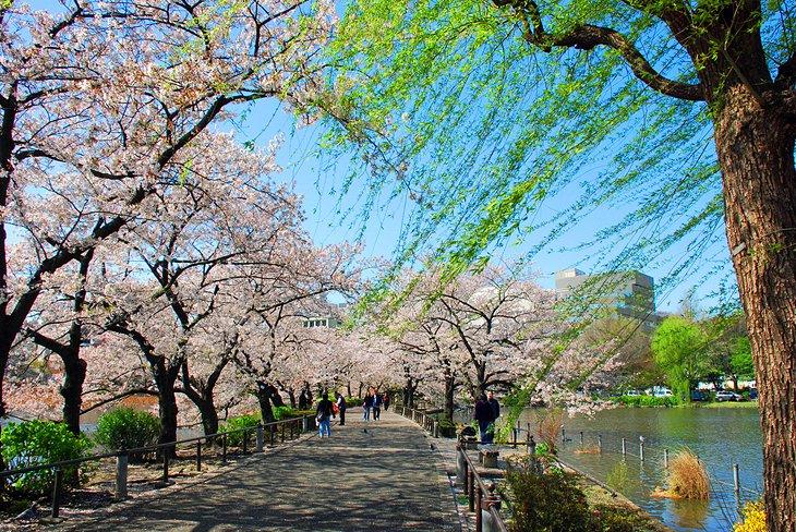เที่ยวโตเกียว-ชมธรรมชาติแบบญี่ปุ่น