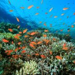 ทริปดำน้ำประจวบคีรีขันธ์ แนวปะการังสวยงาม ไม่ไกลกรุงเทพฯ   ไปกันเถอะ