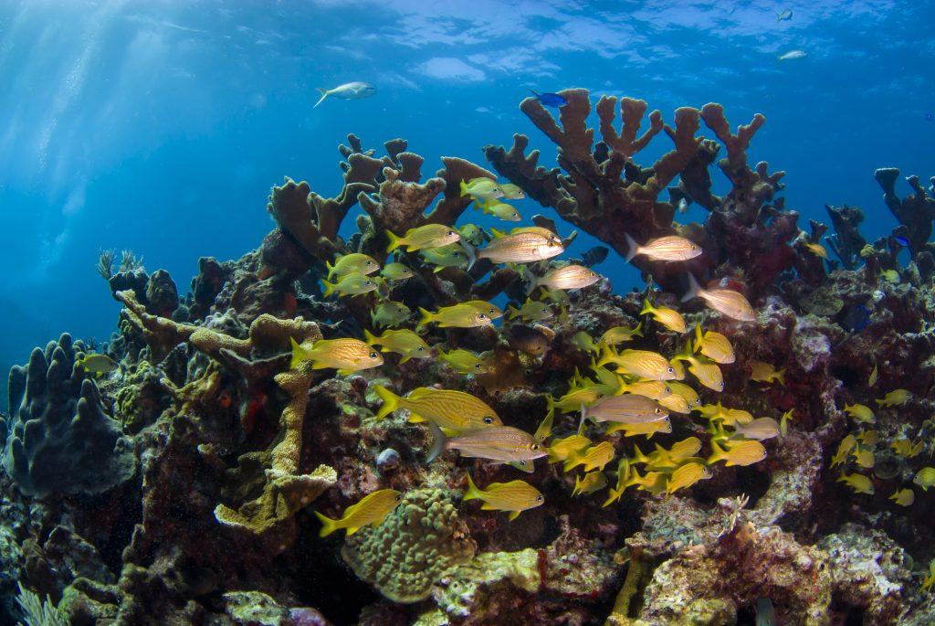 ดำน้ำดูปะการังจังหวัดระยอง-จุดดำน้ำเกาะเสม็ด