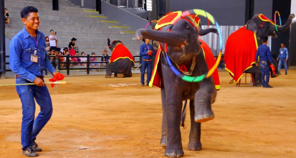 เที่ยวสวนนงนุช-  การแสดงช้างแสนรู้