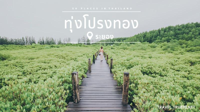 แหล่ง ท่องเที่ยวไทย -ทุ่งโปรงทอง