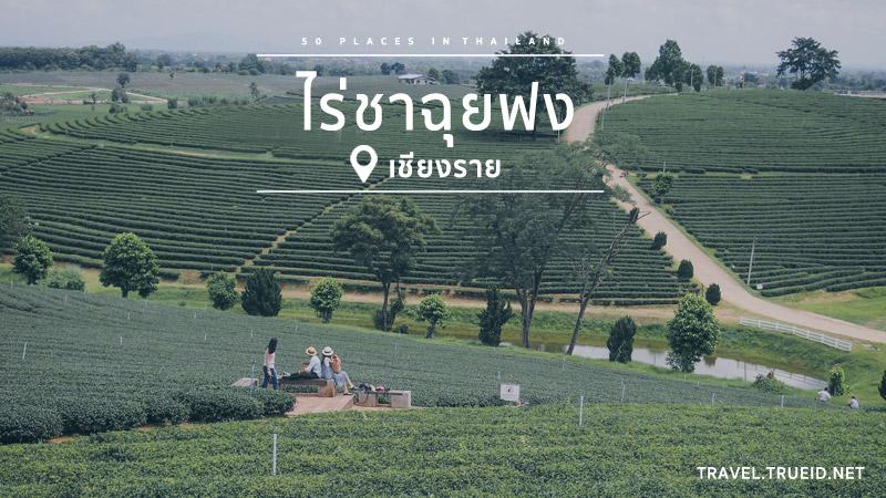 สถานที่ท่องเที่ยวทั่วไทย ไร่ชาฉุย
