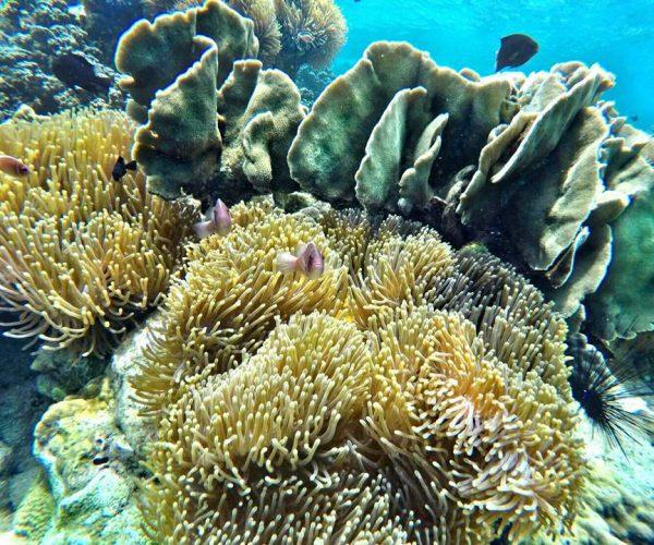 ชี้เป้า จุดดำน้ำดูปะการัง แหล่งใหม่ ๆ ใกล้กรุงเทพฯ ที่หลายคนยังไม่รู้
